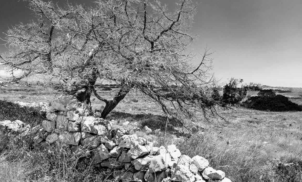 News: JM.arbre et de pierre N&B - Julie MECHALI